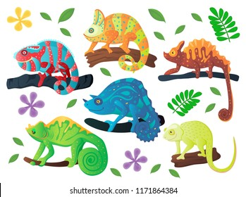 Colorful Chameleon set. Vector illustration, cartoon style. Jungle reptiles composition.