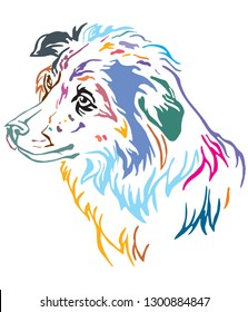 Colorful decorative outline portrait of Dog  Border Collie looking in profile, vector illustration in different colors isolated on white background. Image for design and tattoo.