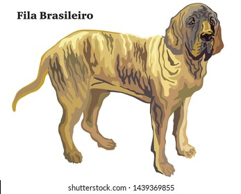 Colorful decorative portrait of standing in profile Fila Brasileiro, vector isolated illustration on white background