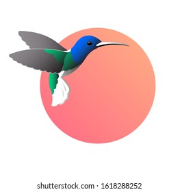 Colorful drawing of birdies colibri. Waving its wings on a round red background. Vector isolated illustration for logo or emblem.