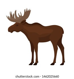 Colorful drawing of a moose. A standing single brown elk with big horns. Vector illustration isolated on white background, flat style.