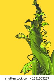 Colorful engraved vintage drawing beanstalk worm eye view growing illustration isolated on blank yellow background
