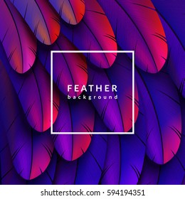 Colorful feathers background. Eps10 vector illustration.
