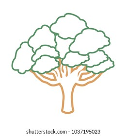 Colorful flat line isolated elm tree vector illustration