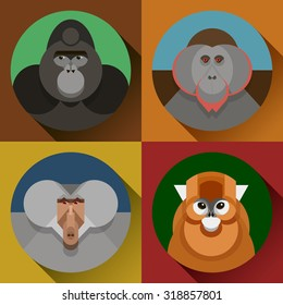 Colorful flat vector monkey images in set, a symbol of the 2016 new year, various primates, gorilla, snub-nosed Chinese monkey, baboon, orangutan