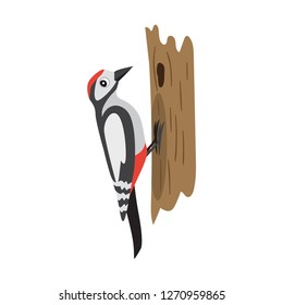 Colorful forest bird, woodpecker sitting on tree, cute woodland animal, cartoon, vector illustration isolated on white background