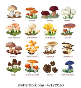 Colorful forest wild collection of assorted edible mushrooms and toadstools with names in cartoon style isolated vector illustration