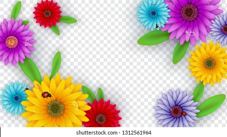 Colorful gerbera daisy flowers decorated on transparent background for Hello Spring poster design.