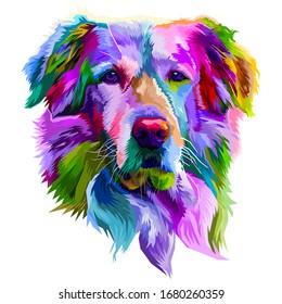 colorful golden retriever dog on pop art style. vector illustration.