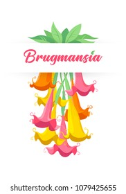 Colorful graphic drawing of flowers and leaves of tropical or garden plants Brugmansia in bloom. Bright vector illustration, isolated on background, for print, cards and gardeners.
