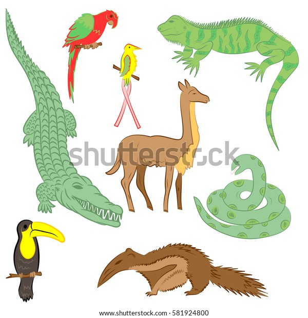 Colorful Hand Drawn Animals of South America. Doodle Drawings of Iguana, Crocodile, Parrot Ara, Toucan, Hummingbird,Anaconda, Anteater and llama. Flat Style. Vector Illustration.