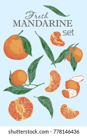 Colorful hand drawn illustration set of mandarine