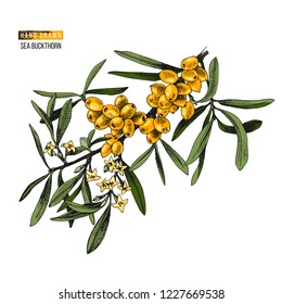 Colorful hand drawn sea buckthorn branch with flowers and berries. Vector illustration
