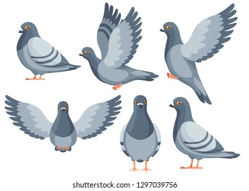 Colorful Icon set of Pigeon bird flying and sitting. Flat cartoon character design. Colorful bird icon. Cute pigeon template. Vector illustration isolated on white background.
