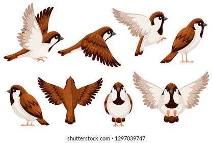 Colorful Icon set of Sparrow bird. Flat cartoon character design. Bird icon in different side of view. Cute sparrow for world sparrow day. Vector illustration isolated on white background.