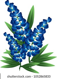 Colorful illustration of bluebonnet flowers.