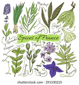 Colorful insulated set of local hand drawn herbs and spices dishes of the world on white background. The indicating arrows. Favourite France. Vector illustration