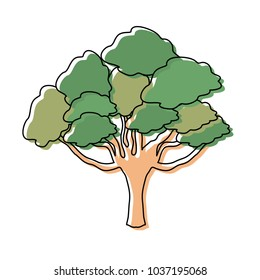 Colorful isolated elm tree design vector illustration