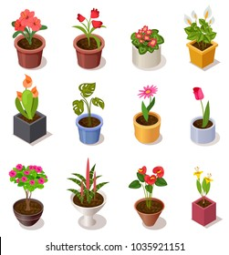 Colorful isometric flowers in ceramic pot collection isolated on white. 3d potted plant for home interior decoration, vector illustration