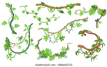 Colorful liana or jungle plant flat set for web design. Cartoon climbing twigs of tropical vines and trees isolated vector illustration collection. Rainforest, greenery and vegetation concept
