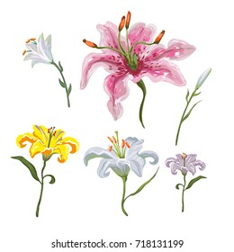 Lily Flower White Images Stock Photos Vectors Shutterstock