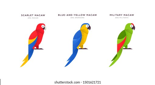 Colorful macaw parrot bird animal illustration on isolated white background. Educational wildlife set with fauna species name label.