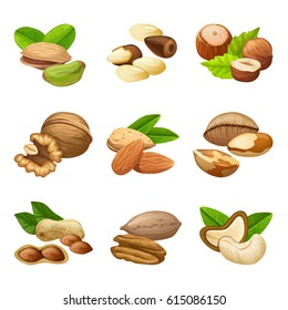 Colorful nuts collection with different seeds grains and beans in cartoon style isolated vector illustration