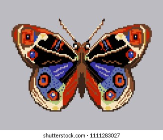 colorful  ornamental butterfly