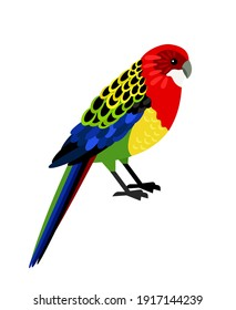 Colorful parrot. Cartoon tropical bird, exotic character of zoo with beautiful feathers, vector illustration of eastern rosella isolated on white background