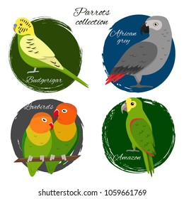 Colorful parrot icon set in flat style. Budgerigar, lovebirds, african grey jaco, yellow-crowned amazon parrots.
