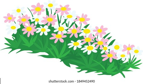 Colorful pink and white garden pollinator plants vector