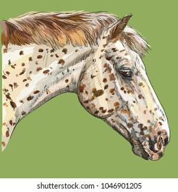 Colorful portrait of Appaloosa horse. Horse's spotted head in profile isolated vector hand drawing illustration on green background
