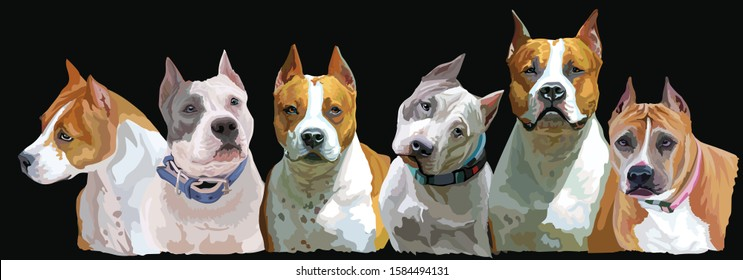 Colorful portrait of group American Staffordshire Terriers (Pitbull) isolated vector realistic illustration on black background. Art for designe, banner and cards.