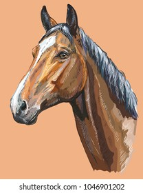 Colorful portrait of Trakehner horse. Horse head  in profile isolated vector hand drawing illustration on beige background