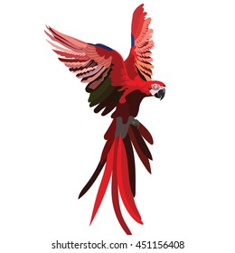 Colorful Red flying parrot Vector isolated