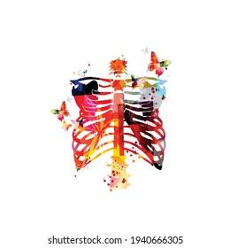 Farbiges Rippenskelett, Rippenknochen, anatomisches Poster mit menschlichem Skelett. Gesundheitswesen, medizinische Nachsorge und diagnostische Vektorgrafik. Menschlicher Brustkorb, menschliche Brust, medizinischer Hintergrund