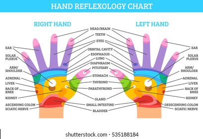 Colorful right and left hand reflexology chart with description of corresponding organs and body parts on white background flat vector illustration