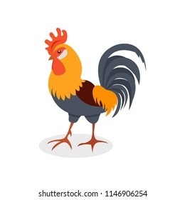 Colorful rooster, poultry farming vector Illustration on a white background