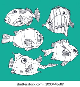 Colorful sea fish collection in vector
