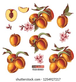 Colorful set of hand drawn peach fruits, branches, flowers and sliced pieces. Vector illustration