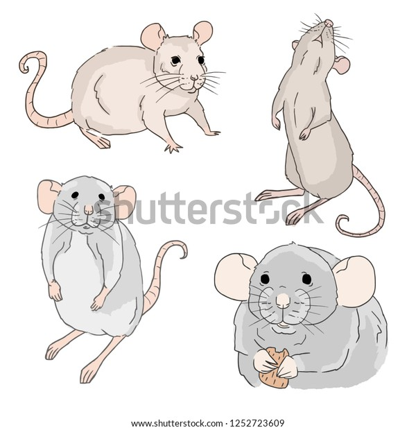 Colorful Set Rat Sketches On White Stock Vector (Royalty