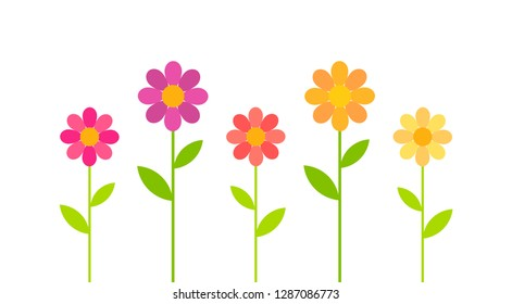 Colorful spring daisy flowers growing. Vector illustration