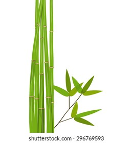 Colorful Stems and Bamboo Leaves. Vector Illustration. EPS10
