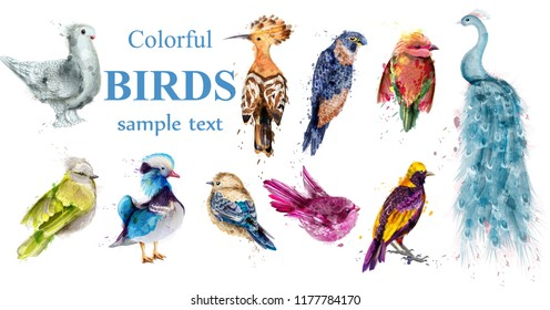 Colorful tropic birds set Vector watercolor. Beautiful peacock, dove, hoopoe, mandarin ducks