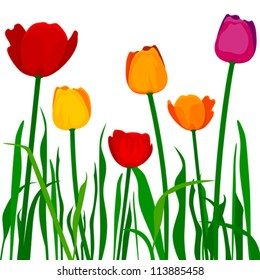 Colorful tulips. Stylized  tulips. Fully editable - change colors, scale to any size