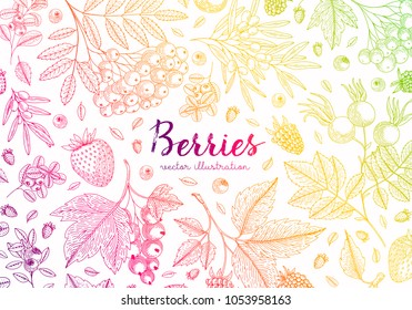 Colorful vector background with berries. Healthy food design template with bluberry, cherry, raspberry, strawberry and etc. Great for label, design menu, recipes, poster, packaging design