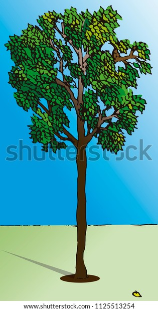 Colorful vector illustration of a young tree in the morning sun, casting a long shadow on the grass.