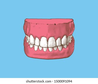 Colorful vintage engraved drawing tooth and gum close jaw represent for dental occlusion in top front view illustration isolated on light blue background