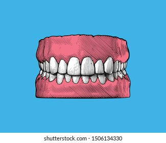 Colorful vintage engraved drawing tooth and gum close jaw represent for dental occlusion in front view illustration isolated on light blue background