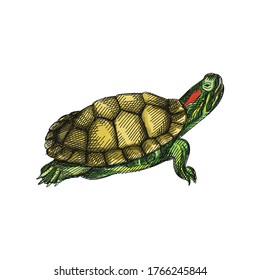 Colorful watercolor Hand-drawn sketch of a turtle on a white background. Domestic animal. Home pet. Domestic turtle. Domestic tortoise